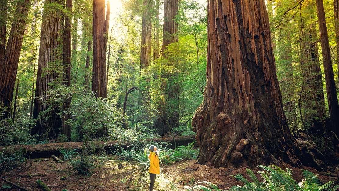 California budget outlook brightens